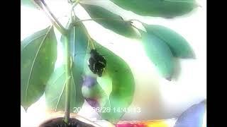一目見て好きになった蝶々 サナギから綺麗な蝶々になって元気に飛んで行...