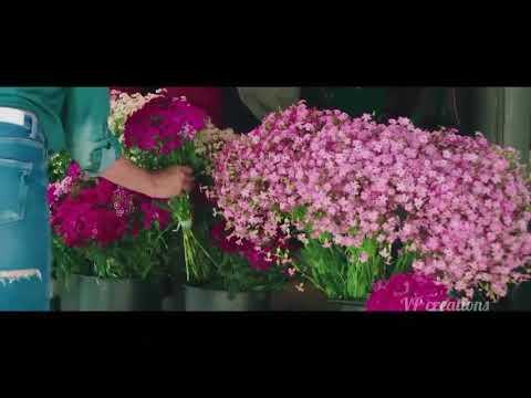 Nenjodu Kalanthavale Full song