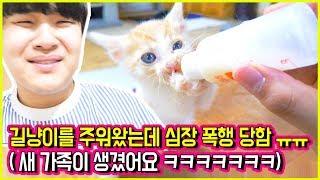 새식구 아기고양이 꽁냥이를 소개합니다! 심장 멈출뻔 ㅠㅠㅠㅠㅠㅠ [ 아기 고양이 꽁냥이 ] 공대생 변승주
