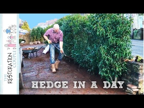 Planting An Instant Hedge