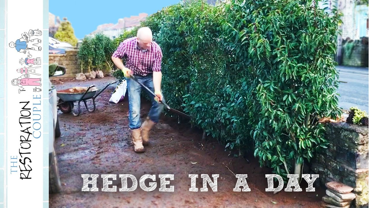 Planting An Instant Hedge Youtube