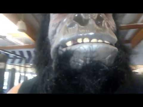 Animal Mind  Man in Gorilla Mask Destroys Chest Bench