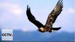 Защитники природы Серия 1 Казахский божественный беркут