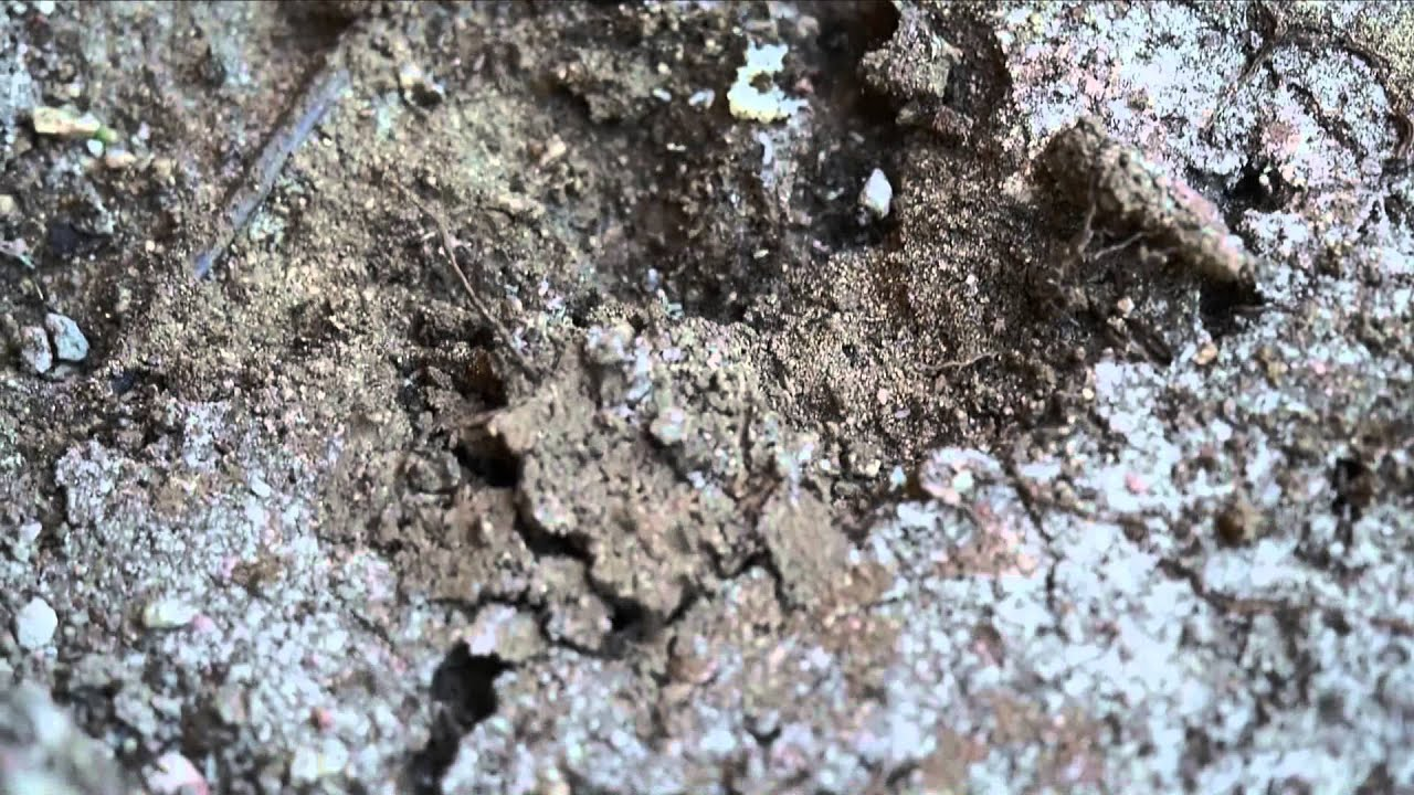how to make an ant colony