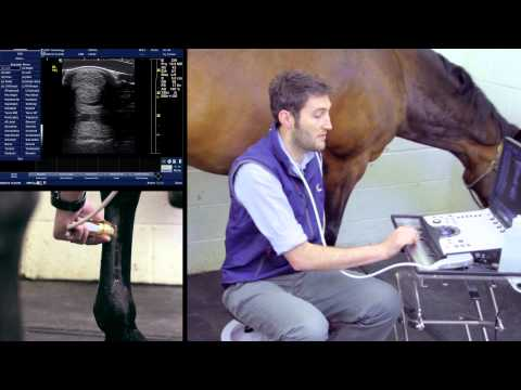 BCF Technology Ultrasonography of the Distal Limb video 5 -- Basic scanning technique