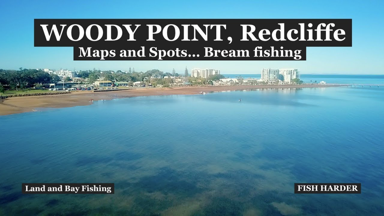 WOODY POINT, Redcliffe, Bream in the shallows