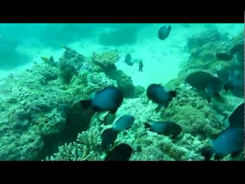 Dive Trip to Donggala - Central Sulawesi, 23-25 September 2011