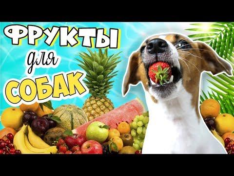 Фрукты могут быть опасны! Какие фрукты и ягоды можно собакам? ��