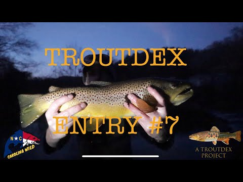 Small Stream Monster Brown Trout- Helton Creek, North Carolina Fly Fishing