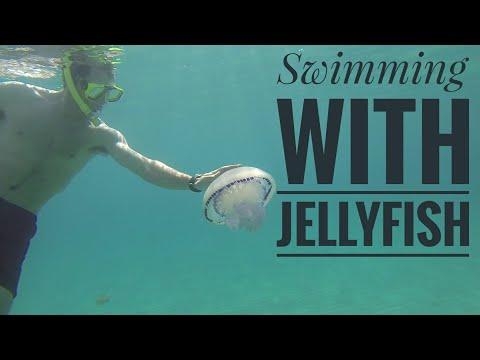 Swimming With Jellyfish 🐚🐡