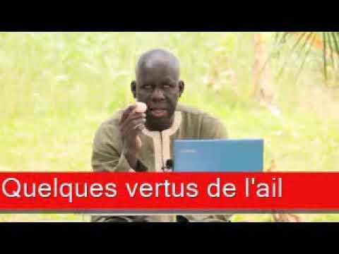 Download Sen wer gi yaram 445: Quelques vertus de l'ail