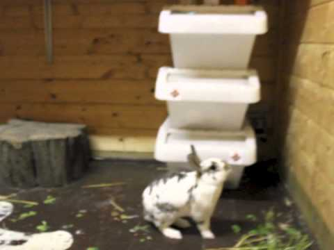 Bunny Is A Parkour Master (VIDEO)