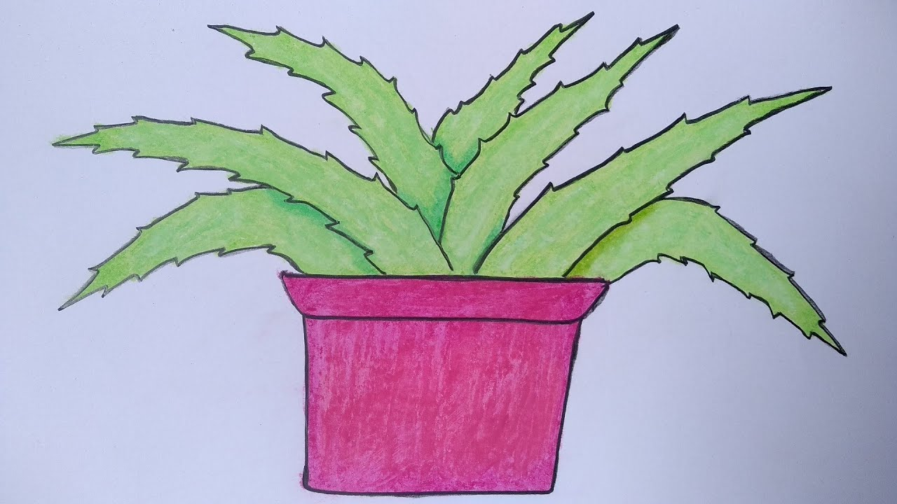 Menggambar Tanaman Lidah Buaya Cara Menggambar Dan Mewarnai Bunga Youtube