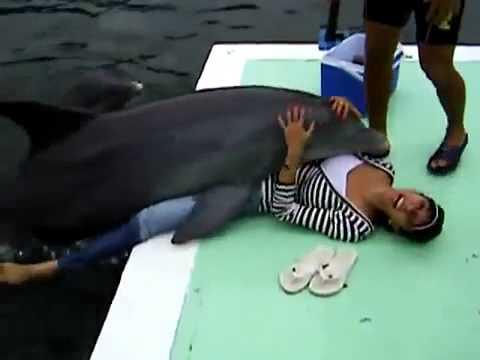 Fata fututa de un delfin.
