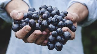 Organic Food: Rooted in Lies? - Professor Carolyn Roberts