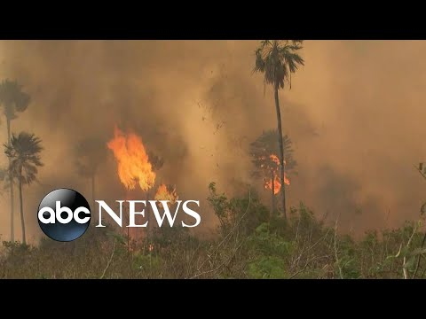 Amazon rainforest on fire: 'Lungs of the world' in flames l