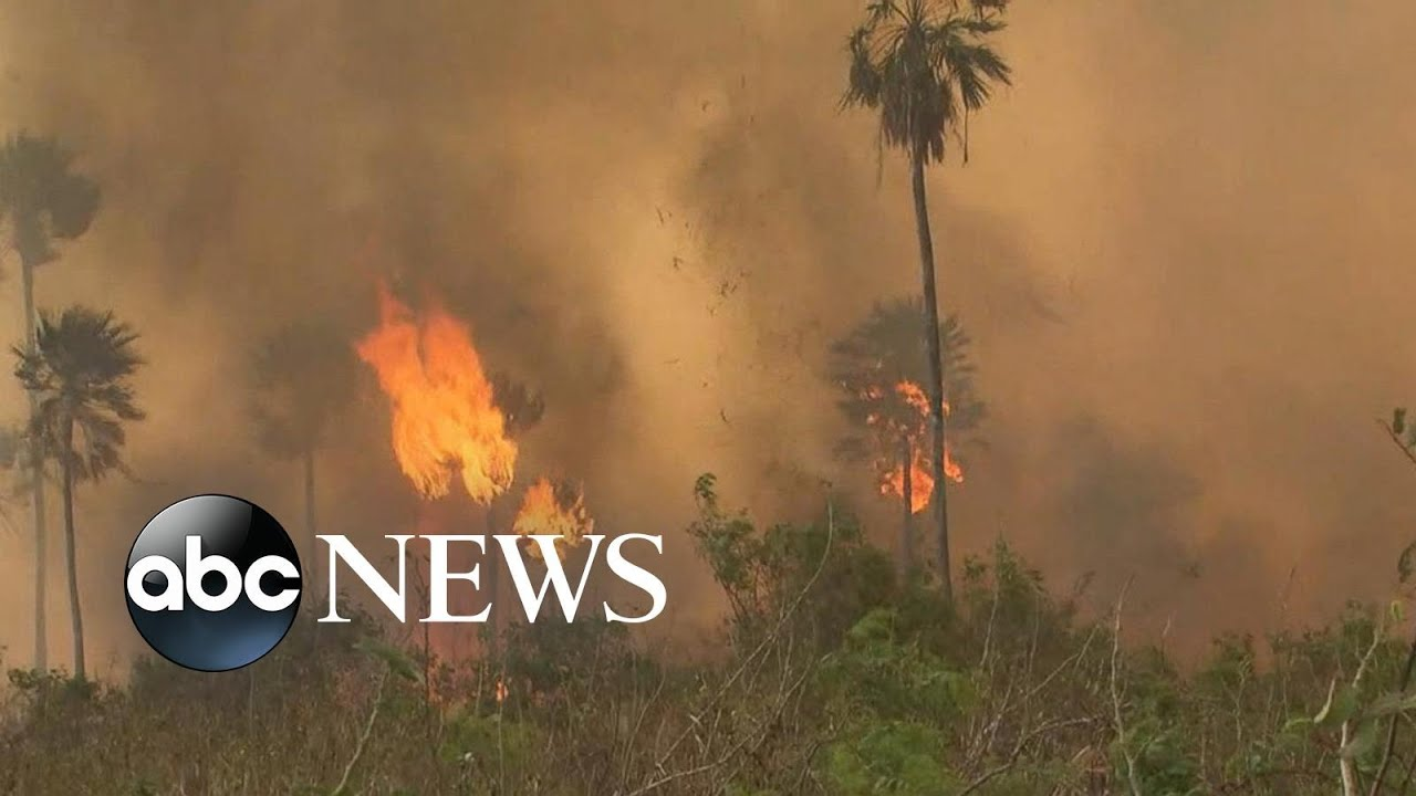 Amazon Rainforest On Fire Lungs Of The World In Flames L