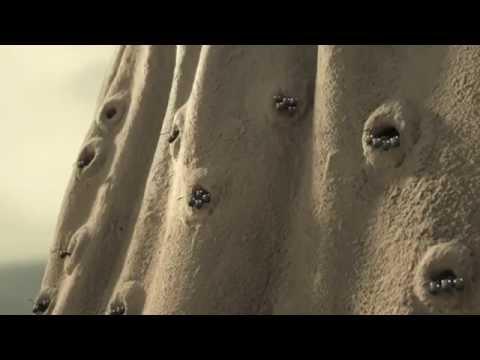 Minuscule: Aventura Furnicutelor Ratacite Trailer Oficial RO
