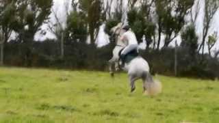 Падали, но поднимались | Horses