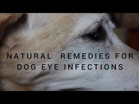 Dog Eye Infections Natural Reme