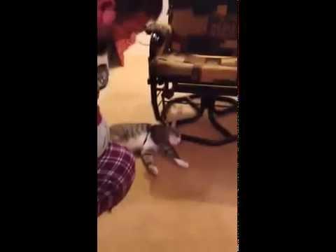 Hilarious cat harness fail.