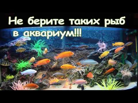 Вопрос: Каких рыб можно содержать вместе с барбусом мшистым?