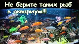 Каких рыб не стоит покупать? А каких рыбок лучше завести?