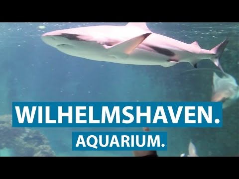 das aquarium in wilhelmshaven unterwasserwelt ferienratgeber nordsee clip youtube. Black Bedroom Furniture Sets. Home Design Ideas