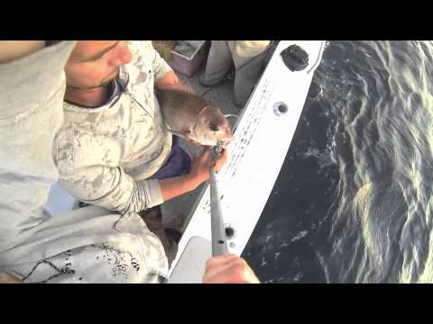 Maximising Fish Survival - Snapper
