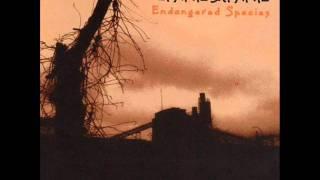 Lynyrd Skynyrd - Heartbreak Hotel.wmv
