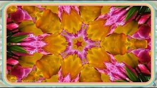 Прекрасная музыка для души ✿ Калейдоскоп из живых цветов