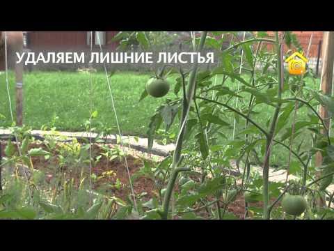 касается видео как нарезать ивылаживать помидоры концу