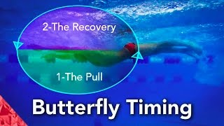 Butterfly Swimming Technique.  Timing.  How to swim butterfly