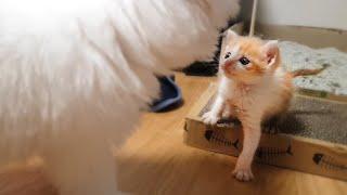 쓰레기장에서 구조한 새끼고양이와 아기강아지 같이 키우기 - 합사 첫날부터 친해지기까지