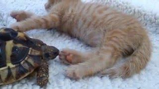 Черепаха ест кота я ржал XD