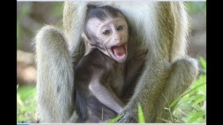 mother attack baby monkey