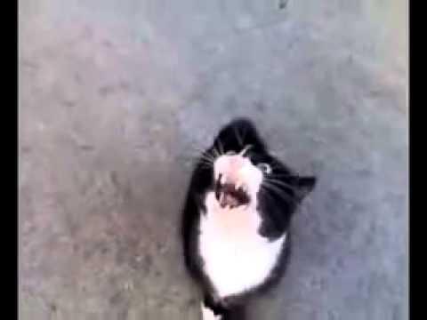 Bất ngờ với chú mèo biết hát và nói tiếng Việt =))
