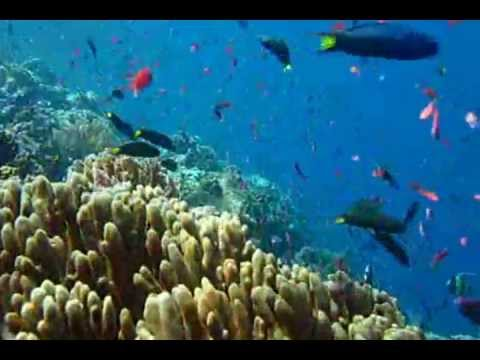 Diving with Komodo Resort - part 1