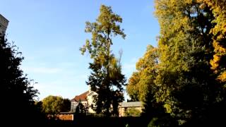 Спил деревьев. Самара.(, 2014-09-30T09:57:38.000Z)