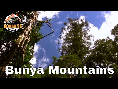 Bunya Mountains National Park - Qld Australia