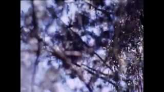 Miles Bandit - Soft Dreams (Full Album)