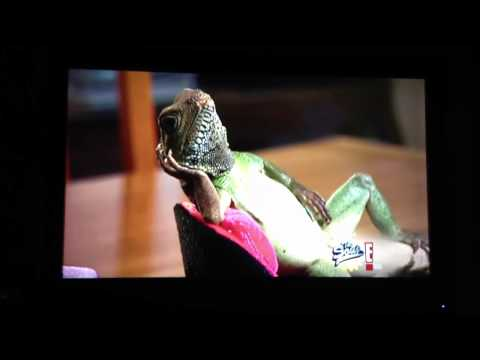 The Soup - Freaky Lizard Guy