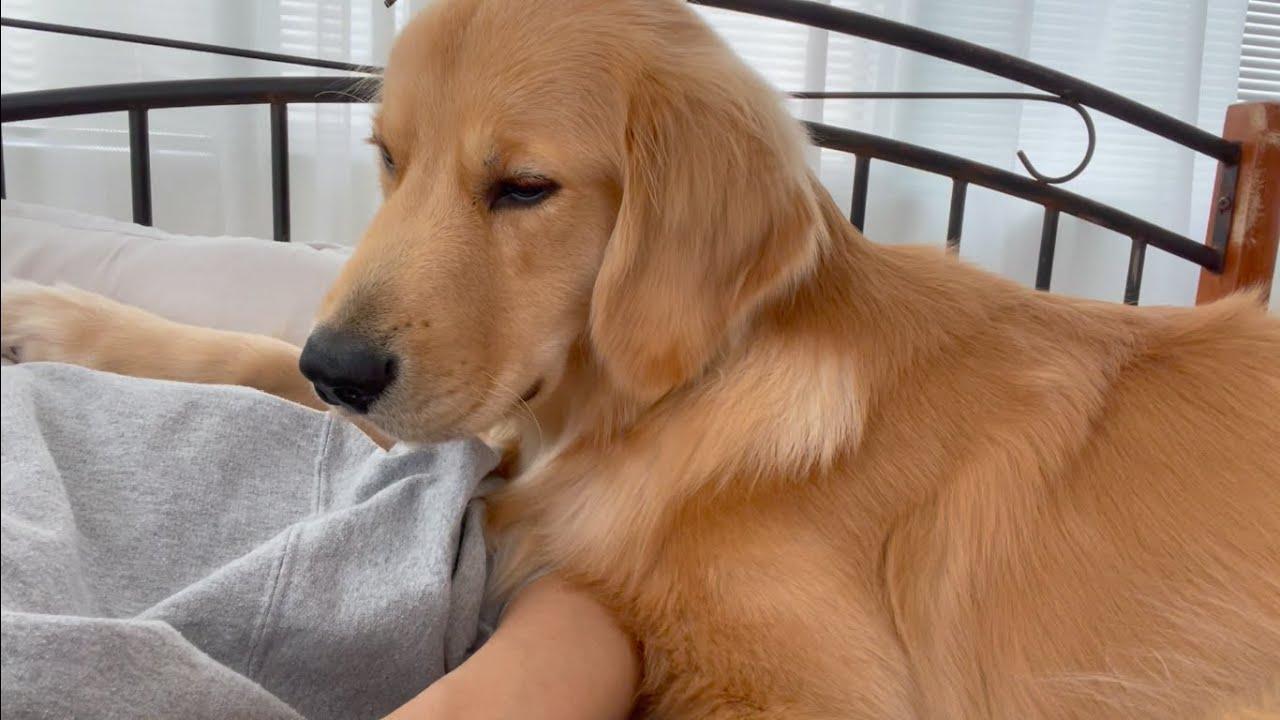 冷房の効いた部屋で愛犬と寝たら天国だった【お知らせあり】
