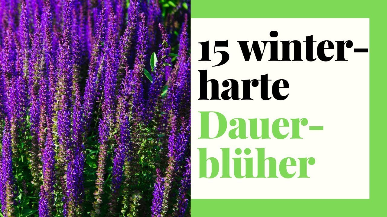 12 winterharte Dauerblüher - Stauden für Garten, Kübel und Balkon Farbe