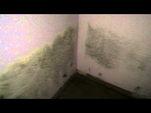 Black Mold Remediation (Mold Removal) Willowbrook, IL