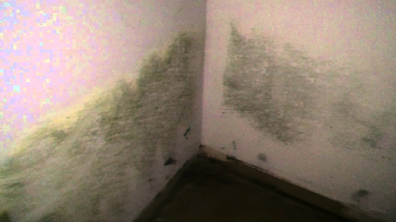 Black mold inspection cost - Black Mold Remediation Mold Removal Willowbrook Il