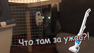 Реакция Пум Пумыча на пылесос / Пума в шоке!