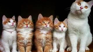 Порода кошек. Каннани. Красивая кошка.Любит погулять на улице .
