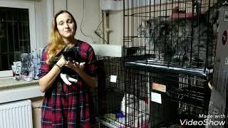 Приют Матроскин благодарит волшебников Teddy Food за помощь! (история спасения кошек)