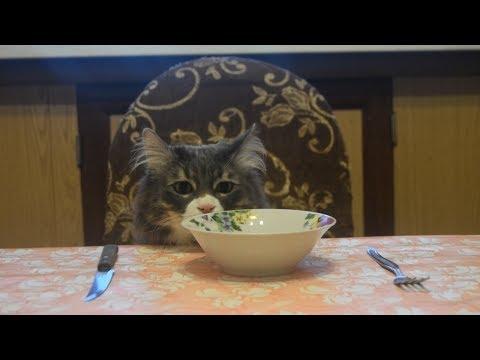 E1NS - Покорми кота